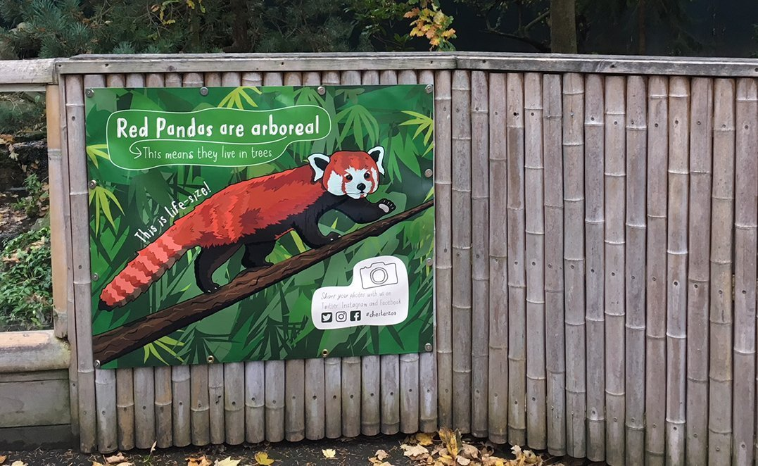 Life-size Red Panda cropped